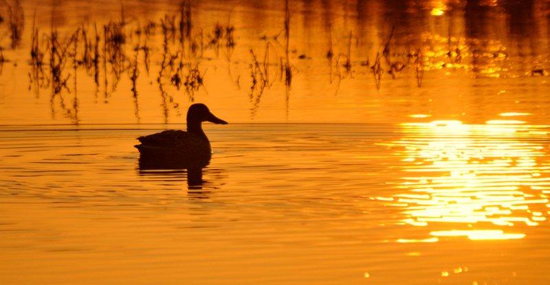 Mestolone al tramonto