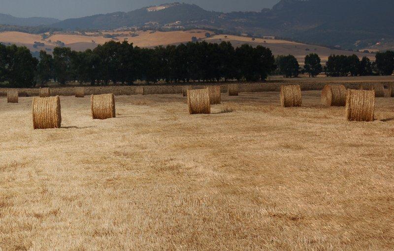 fienagione zona agricola Riserva