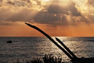 tronchi sulla spiaggia al tramonto