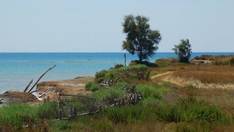 tamerici sulla costa