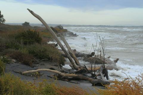 mareggiata con tronco