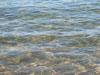 Fondo marino - Sabaudia