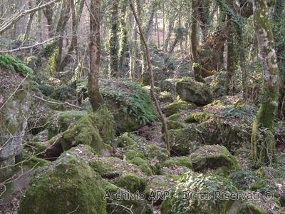Rocce laviche nel bosco del Sasseto