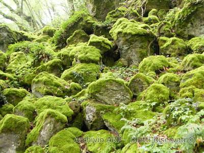 Roccia lavica con muschio nel bosco