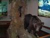 Prototipo di orso - Centro visite Pescasseroli