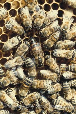 Le api della Riserva