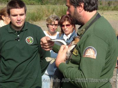 Natura in viaggio 2004 - Guardiaparco con svasso maggiore