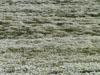 Campo di margherite