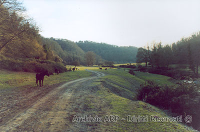 Paesaggio - Valle del Sorbo