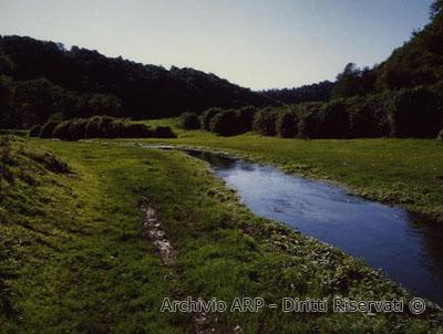 Vegetazione lungo un corso d'acqua - Valle del Sorbo