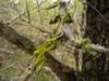 Corteccia di Olmo con licheni